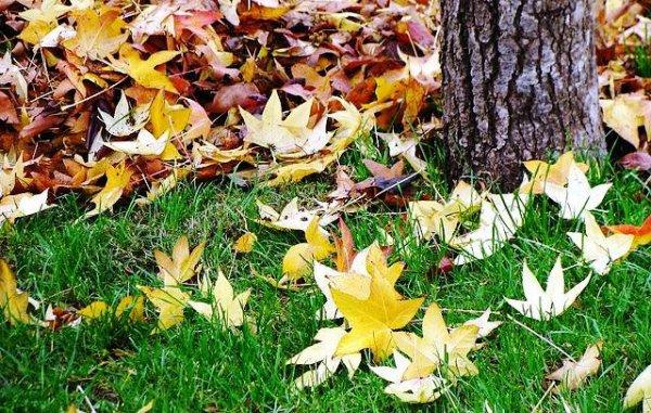 Revelan fuente de efecto invernadero a partir de hojas en descomposición