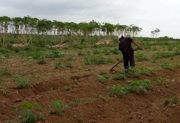 Evaluaron autoridades camagüeyanas marcha de la producción de alimentos en Najasa (+Post)