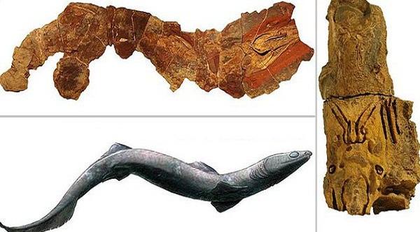 Por vez primera hallan esqueleto casi completo de un tiburón prehistórico