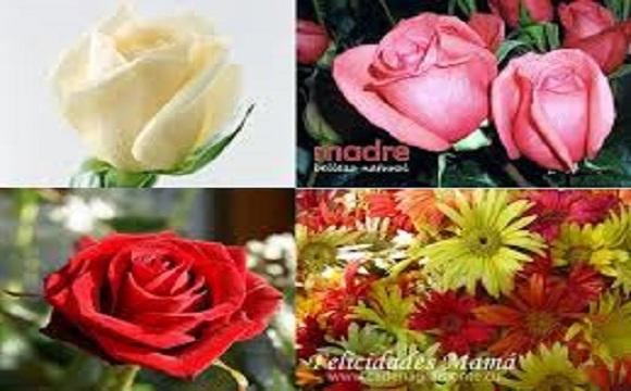Todas las flores para las madres en este día tan especial