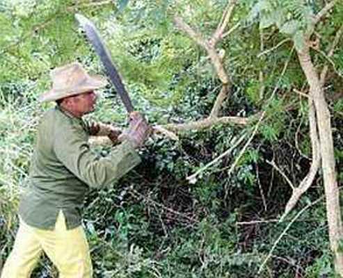 Eliminan en Camagüey especies exóticas invasoras