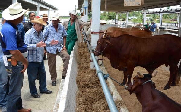Llama Machado Ventura a potenciar la producción de alimentos desde la rama agropecuaria