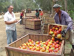 Fabricarán compotas y jugos de frutas en Santa Cruz del Sur