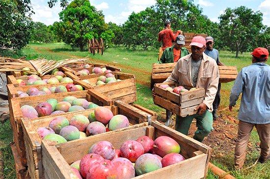 Favorecidos dos municipios camagüeyanos por proyecto agrícola de colaboración