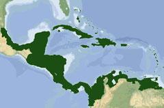 Asociación de Estados del Caribe traza estrategia comercial