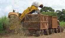 Modernas máquinas cosechadoras cortan mayoría de caña de actual zafra en Cuba