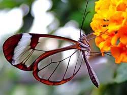 Ve la luz primer Libro Rojo de Invertebrados de Cuba