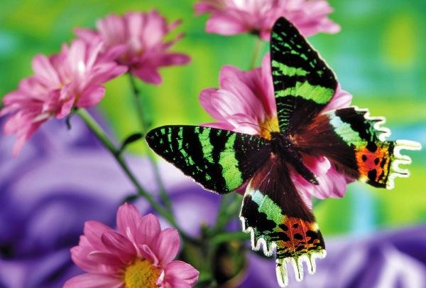 Los colores de las mariposas: secreto revelado