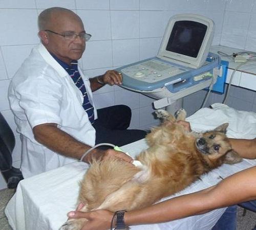 Respalda LABIOFAM en Camagüey servicio integral de la Medicina Veterinaria