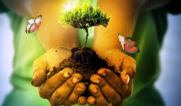 Desde el Teatro, un llamado a proteger el medio ambiente