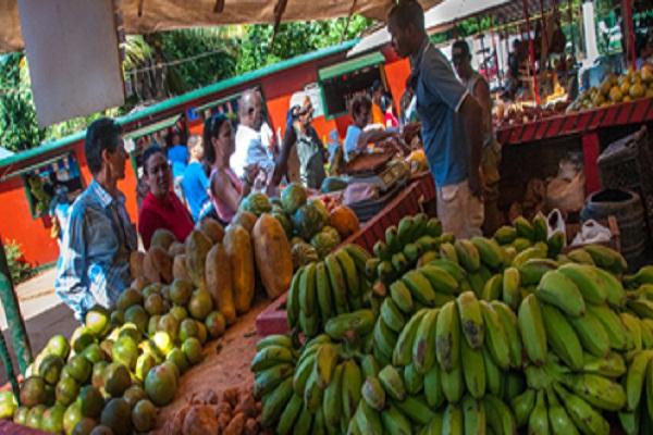 Titular cubano de la Agricultura evalúa en Camagüey transformaciones del sistema de Acopio
