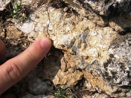 Nuevo yacimiento de microfósiles puede descifrar enigma sobre la evolución