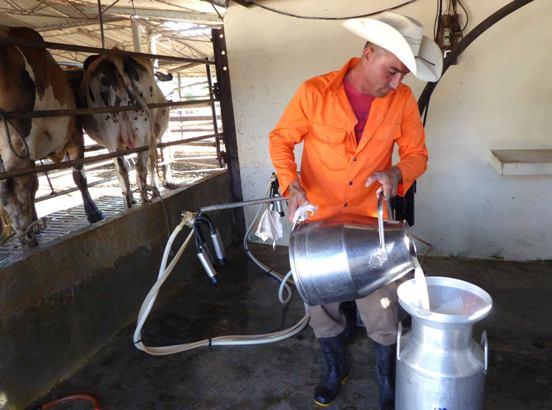Camagüey ya tiene dos cooperativas millonarias en la producción de leche