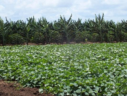 Unidades productivas de Empresa Azucarera camagüeyana en busca del autoabastecimiento