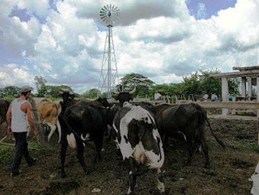Ámbito ganadero cubano ostenta progresos entre el empresariado de Europa