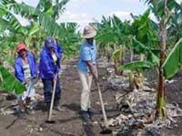 Celebran en oriental provincia de Guántanamo acto central por Día del Campesino cubano