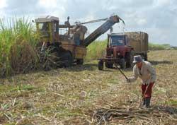 Vertientes será sede en Camagüey por el Día del Campesino