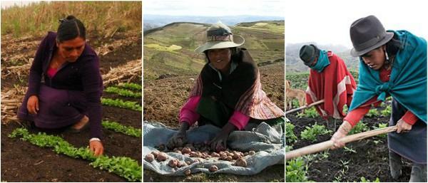 Campesinas e indígenas de Bolivia tienen asegurada titularidad de la tierra