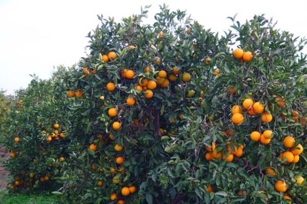 Capacitan en Cuba a productores de frutas orgánicas