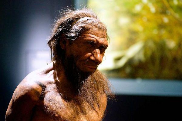 """Planean expertos """"cultivar"""" el cerebro de un neandertal"""