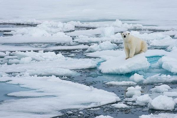 Preocupado titular de la ONU por estado del hielo del Ártico