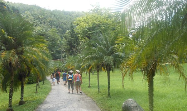 Cuba among the islands with greatest plant diversity