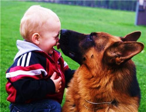 Especialistas identifican en los perros los genes para ser sociables