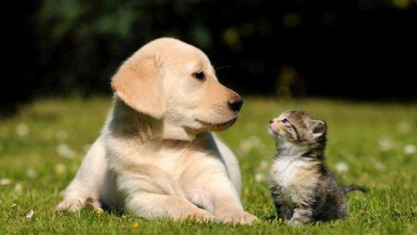 Demuestra estudio que los perros son más inteligentes que los gatos