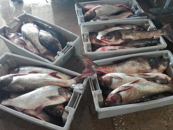 PESCACAM: en busca de la eficiencia y la sostenibilidad pesquera