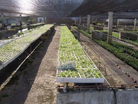 Biofactory in Camagüey Fosters Cuba's Agricultural Development