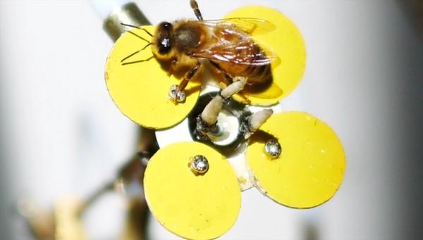 Sorprende tecnología que imita a la naturaleza con plantas robot