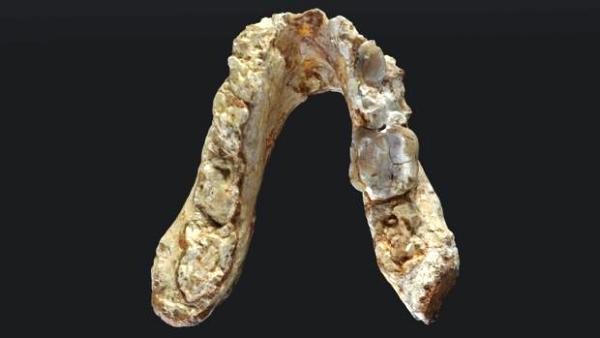 Hallan en los Balcanes restos prehumanos de siete millones de años