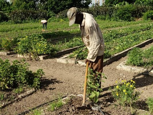 La producción de alimentos, desde la tierra hasta la mesa
