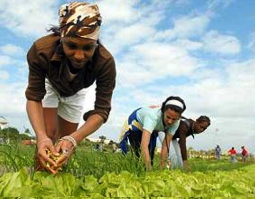 Empeñados jóvenes camagüeyanos en la producción de alimentos