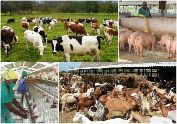 Propone Cuba  intercambiar experiencias en foro mundial sobre producción animal