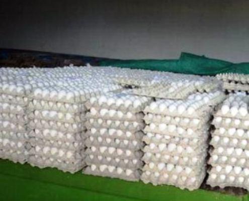 Recuperación de la Avicultura: distribuyen en Camagüey huevos de la canasta familiar