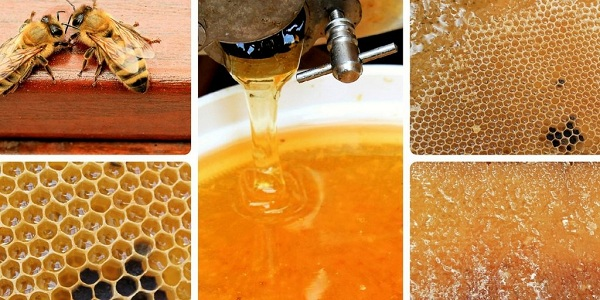 Beekeeping in Camagüey seeks to strengthen their commitments productive