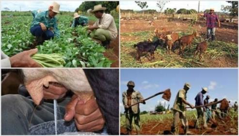 Proyecto BASAL favorece desarrollo agropecuario en municipio camagüeyano de Jimaguayú