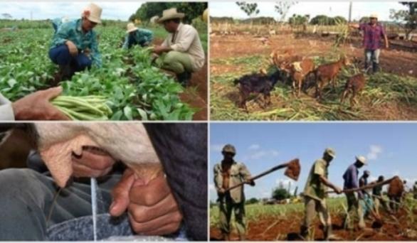 Convocan a campesinos camagüeyanos a perfeccionar su quehacer