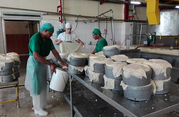 Contribuye fábrica de quesos de Sibanicú a la sustitución de importaciones (+ Fotos)