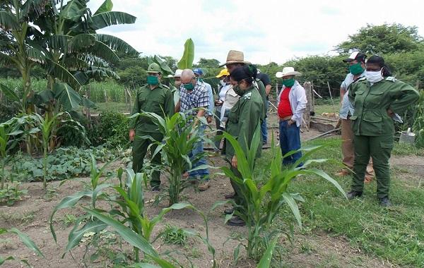Recorre Consejo de Defensa Provincial áreas productivas de los municipios de Najasa y Jimaguayú