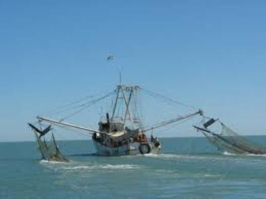 Muestra Camagüey buenos resultados en la  pesca de pepino de mar