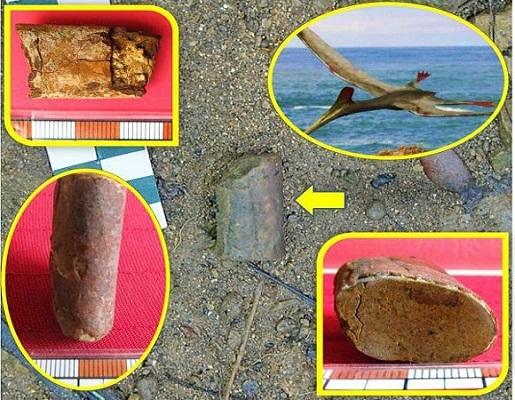 Hallan restos fósiles de pterosaurio en el centro-sur de Cuba