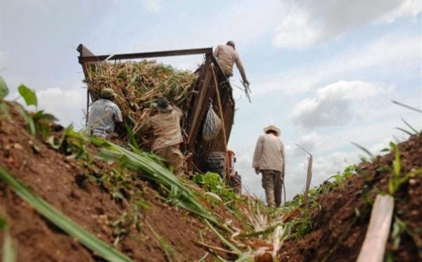 Azucareros camagüeyanos por mayores compromisos productivos