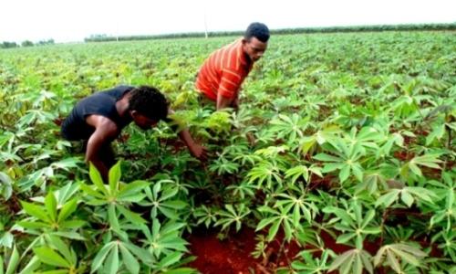 Avanzan producciones locales en Camagüey a favor de la seguridad alimentaria