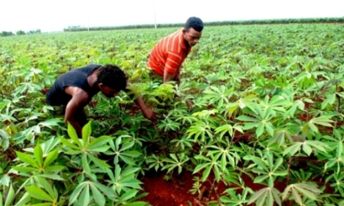 Garantizan a agricultores camagüeyanos capacitación sobre manejo correcto del suelo
