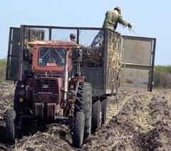 Camagüey trabaja por garantizar preparación de tierra para siembra de caña