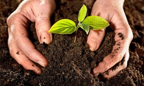 FAO representative in Cuba calls for sustainable agriculture