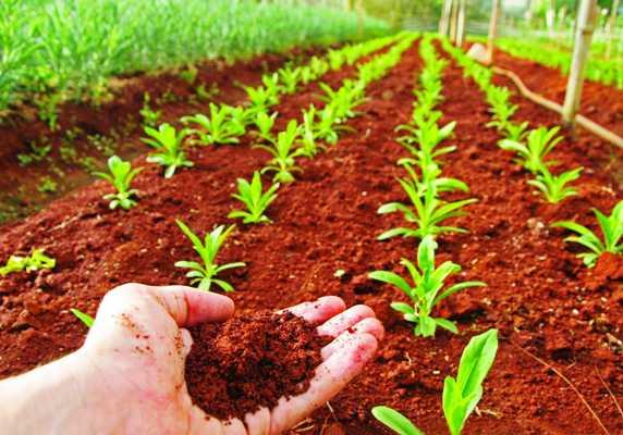 Funcionaria de la FAO reconoce experiencia de Cuba en manejo sostenible de suelos