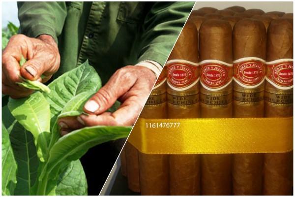 Sesiona en Cuba foro internacional sobre el tabaco